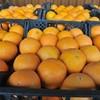 Севастопольцам обещают сирийские апельсины