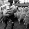 Крымскую ферму обокрали ее же работники