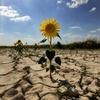 Крым оценил финансовый ущерб из-за засухи