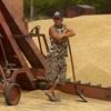Севастополь поставит в Сирию 100 тысяч тонн зерна