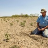 Аграрии Крыма потеряли 4 миллиарда из-за засухи