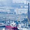 В Керченском рыбном порту впервые за 10 лет запахло рыбой