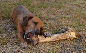 Собака нашла в лесу под Алуштой человеческую руку