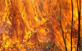 Крымчан экстренно предупредили о пожароопасности