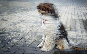 Штормовое предупреждение: в воскресенье Крым польет дождем