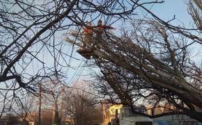В Симферополе убирают снесенные ветром деревья