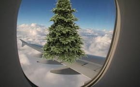 В аэропорту самая высокая елка. Но с оговоркой
