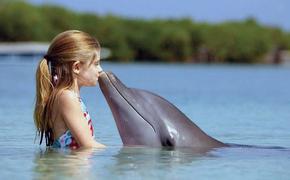 В этом году дельфины начали сходить с ума раньше обычного