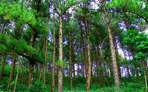 Вокруг полигона в Каменке посадят деревья