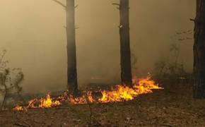 Лесной пожар под Симферополем потушили спустя два дня