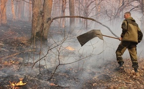 В Крыму ввели режим ЧС из-за лесного пожара