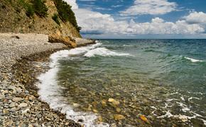 Из Черного моря могут исчезнуть мидия и креветка
