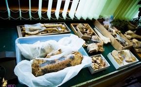 В пещере «Таврида» нашли самые древние в РФ кости животных