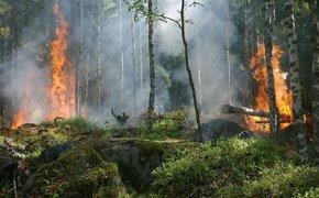 Под Симферополем загорелось несколько гектаров леса