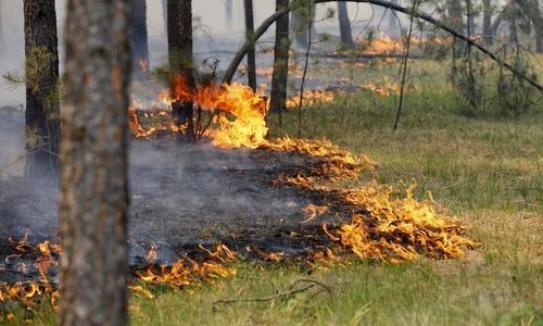 В Крыму сгорело 24 гектара травы около леса
