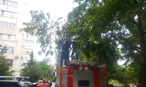 В Севастополе спасатели МЧС ловили енота