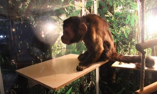Симферопольцы в шоке от условий в новом контактном зоопарке