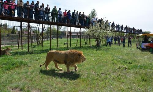 Судьба парка «Тайган» решится завтра