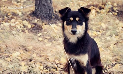 Жительница Судака спасла брошенных на смерть собак