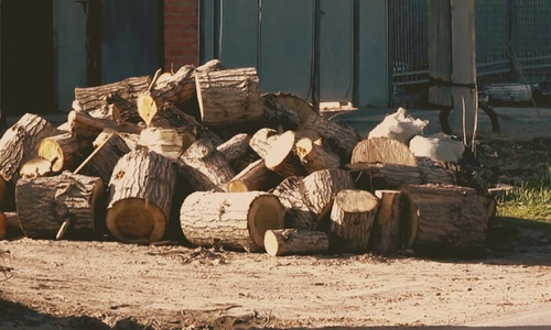 Власти Крыма закупают на зиму почти 1000 тонн дров