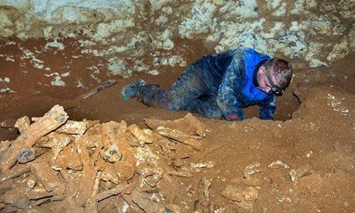 В пещере «Таврида» нашли 20 видов древних животных