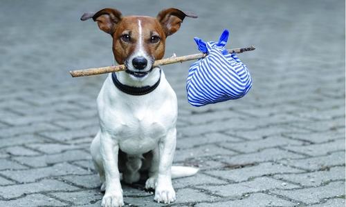В Севастополе хотят открыть госприюты для животных