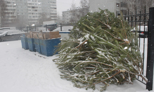 Новогодние ели в Крыму можно будет сдать в утилизацию