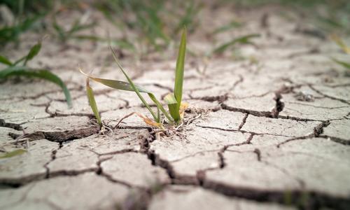 Следующий год в Крыму может стать рекордно засушливым