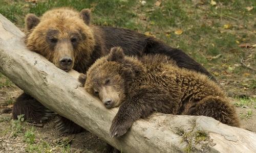 Крымские власти заявили о ликвидации зоопарков Зубкова, – зооволонтер