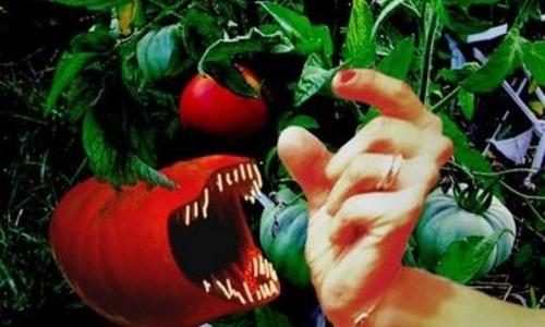 Крымчанам посоветовали не покупать херсонские и одесские помидоры