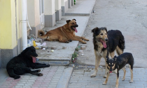 В Севастополе продолжают убивать бездомных псов