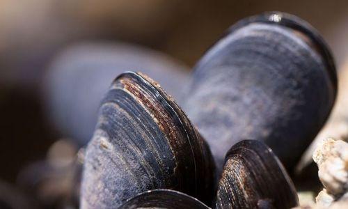 Севастопольских браконьеров накажут за вылов мидий