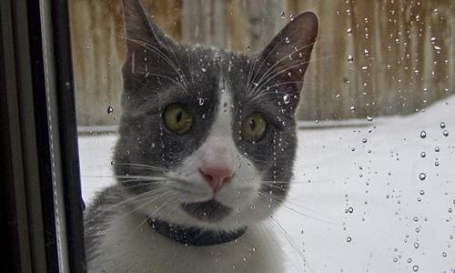 Сегодня в Крыму – холод, дождь и мокрый снег