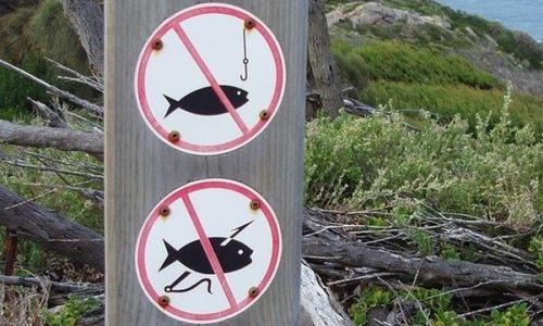 В Черном море на время запретили ловить кефаль