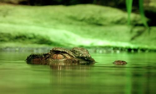 Ветеринары не нашли крокодила возле школы в Симферополе