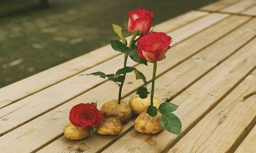 В канун 8 марта в Крыму тюльпаны по 100, а розы по 300 рублей