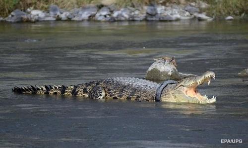 Из Ялтинского крокодиляриума не сбегал крокодил