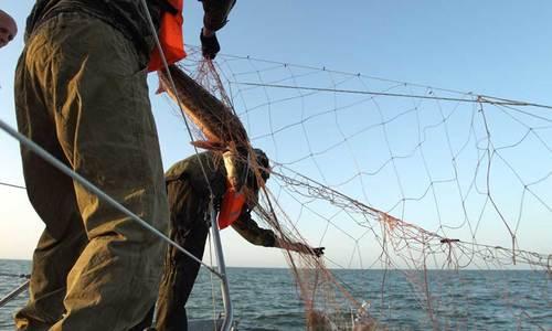 В проливе у Керчи из сетей браконьеров освободили полсотни рыб