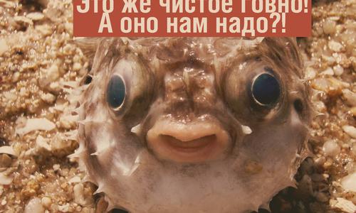 Рыбы занимаются сексом и мешают класть канализацию в Крыму