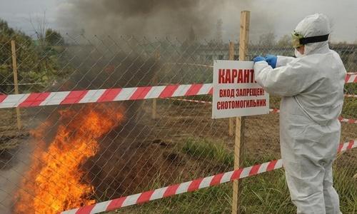 Африканская чума свиней в Крыму может затянуться на годы