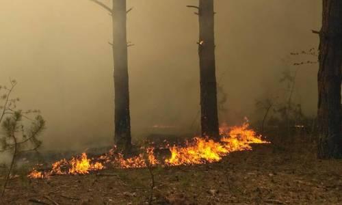 Лесной пожар под Симферополем локализован спустя 11 часов