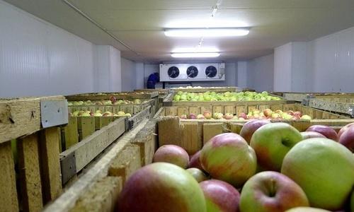 Красногвардейский район станет складом для фруктов