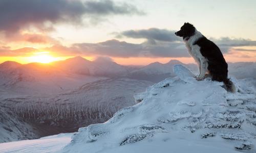 В Севастополе спасали застрявшую на скале собаку