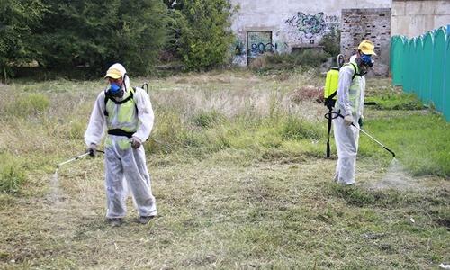 Уничтожение амброзии в Симферополе обойдется в два миллиона