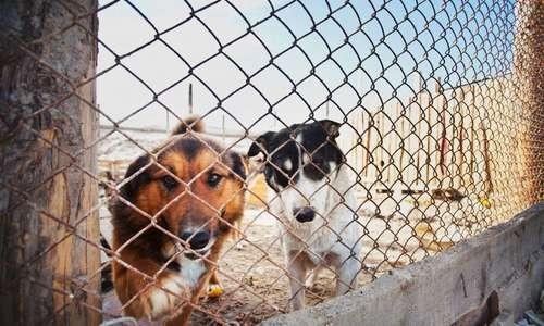 В Севастополе откроют приют для животных