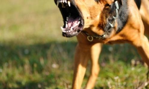 Феодосийцев массово атакуют бродячие животные