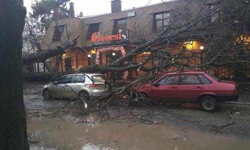 В Симферополе рухнувшее дерево перекрыло путь к горящей газовой трубе