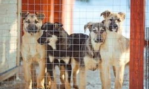 В Симферополе построят приют для бездомных животных