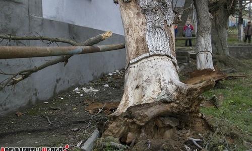 Ветер обрушил на жилой дом огромные деревья
