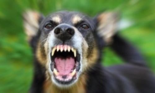 Маленькую керчанку покусала бездомная собака